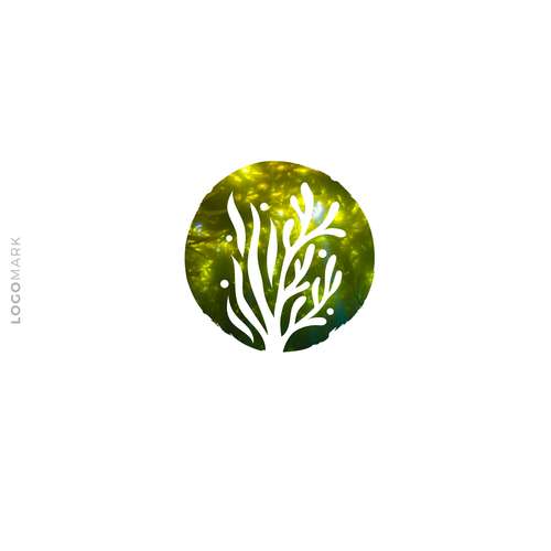 Liquid logo with the title 'The Seaweed Effect '